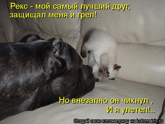Котоматрица: Рекс - мой самый лучший друг, защищал меня и грел! Но внезапно он чихнул ,  И я улетел!..