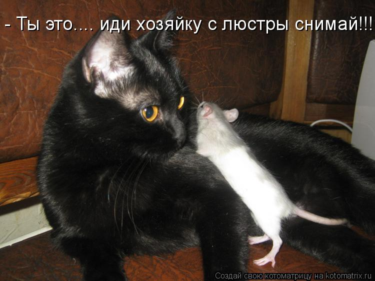 Котоматрица - - Ты это.... иди хозяйку с люстры снимай!!!