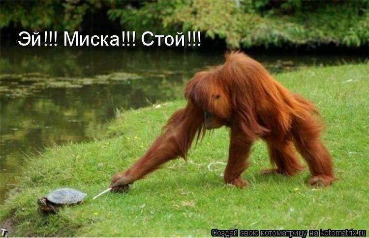 Котоматрица: Эй!!! Миска!!! Стой!!!