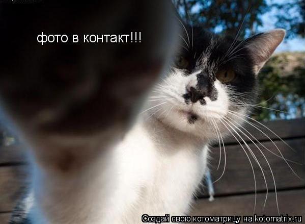 Котоматрица: фото в контакт!!!