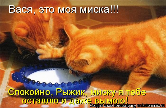 Котоматрица: Вася, это моя миска!!! Спокойно, Рыжик, миску я тебе оставлю и даже вымою!