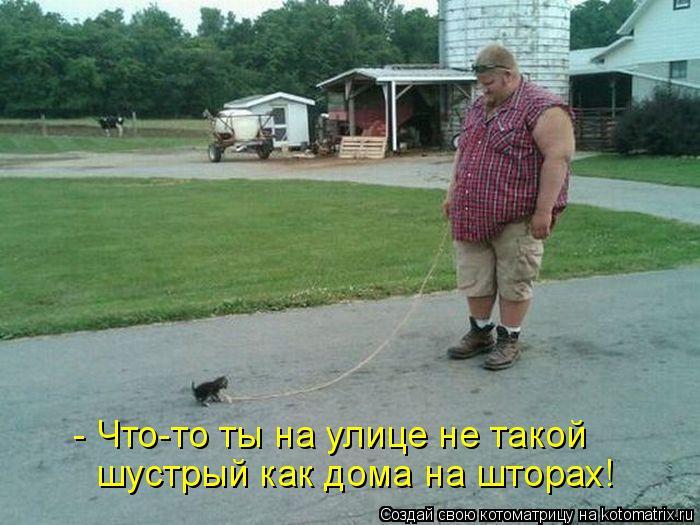 Котоматрица: - Что-то ты на улице не такой  шустрый как дома на шторах!