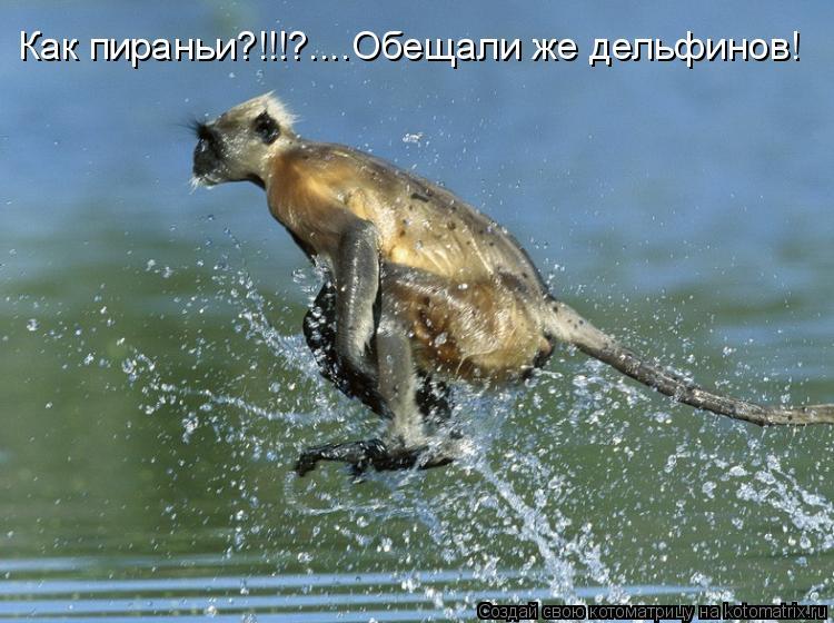 Котоматрица: Как пираньи?!!!?....Обещали же дельфинов!