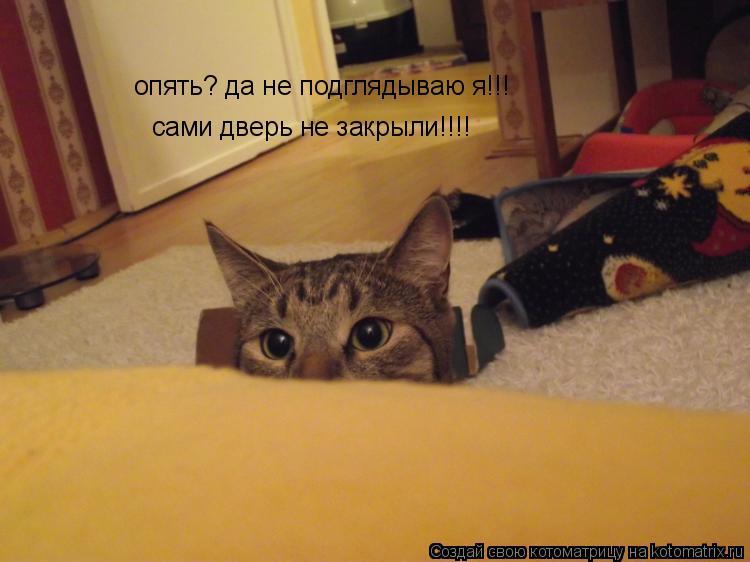 Котоматрица: опять? да не подглядываю я!!! сами дверь не закрыли!!!!