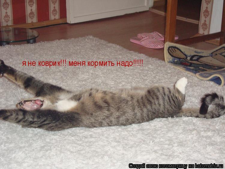 Котоматрица: я не коврик!!! меня кормить надо!!!!!