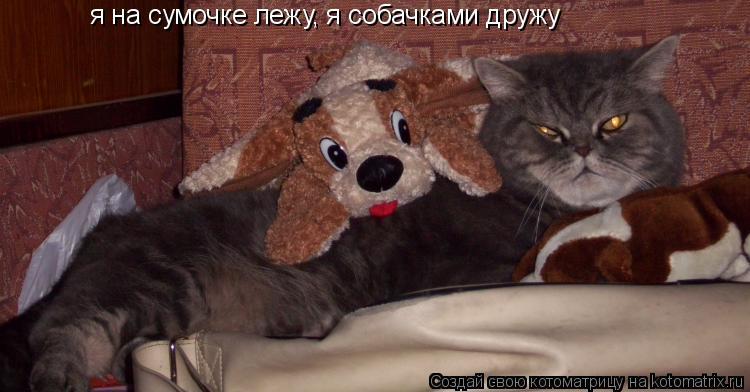 Котоматрица: я на сумочке лежу, я собачками дружу