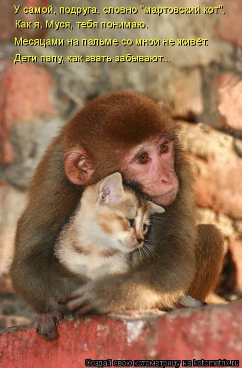 """Котоматрица: У самой, подруга, словно """"мартовский кот"""". Как я, Муся, тебя понимаю. Месяцами на пальме со мной не живёт.  Дети папу, как звать забывают..."""