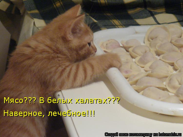 Котоматрица - Мясо??? В белых халатах??? Наверное, лечебное!!!