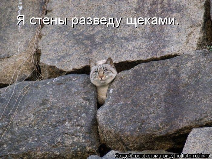 Котоматрица: Я стены разведу щеками.
