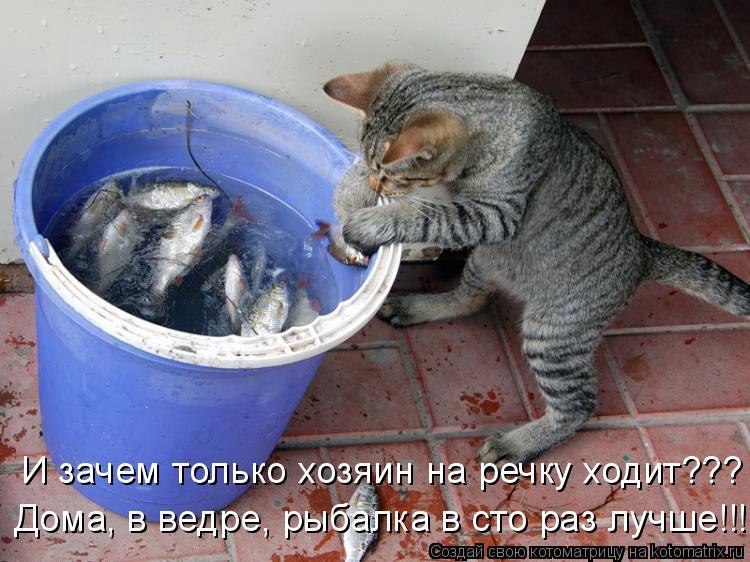Котоматрица - Дома, в ведре, рыбалка в сто раз лучше!!! И зачем только хозяин на реч
