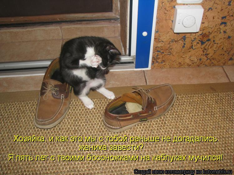 Котоматрица - Я пять лет с твоими босоножками на каблуках мучился! Хозяйка, и как эт