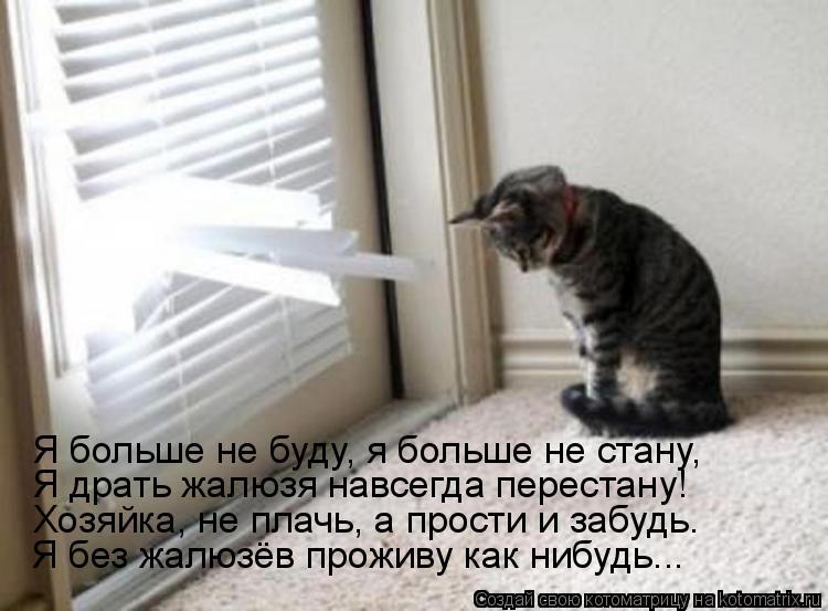 Котоматрица: Я больше не буду, я больше не стану, Я драть жалюзя навсегда перестану! Хозяйка, не плачь, а прости и забудь. Я без жалюзёв проживу как нибудь..