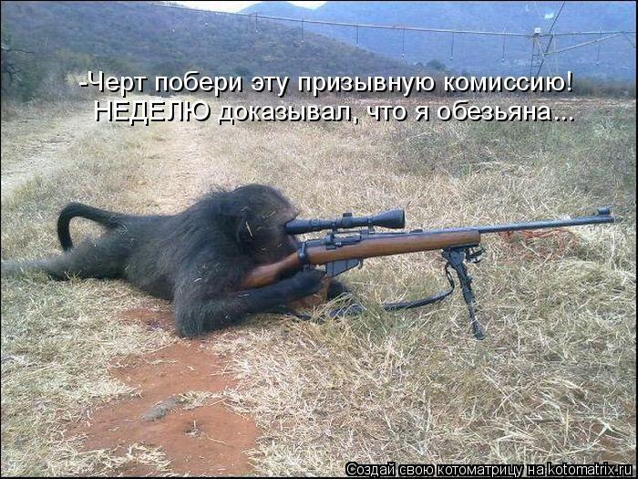 Котоматрица - -Черт побери эту призывную комиссию! НЕДЕЛЮ доказывал, что я обезьяна.