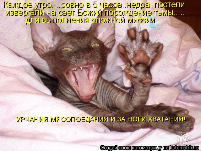 Котоматрица: Каждое утро....ровно в 5 часов..недра  постели извергали на свет Божий порождение тьмы...... для выполнения сложной миссии : УРЧАНИЯ,МЯСОПОЕДАНИ