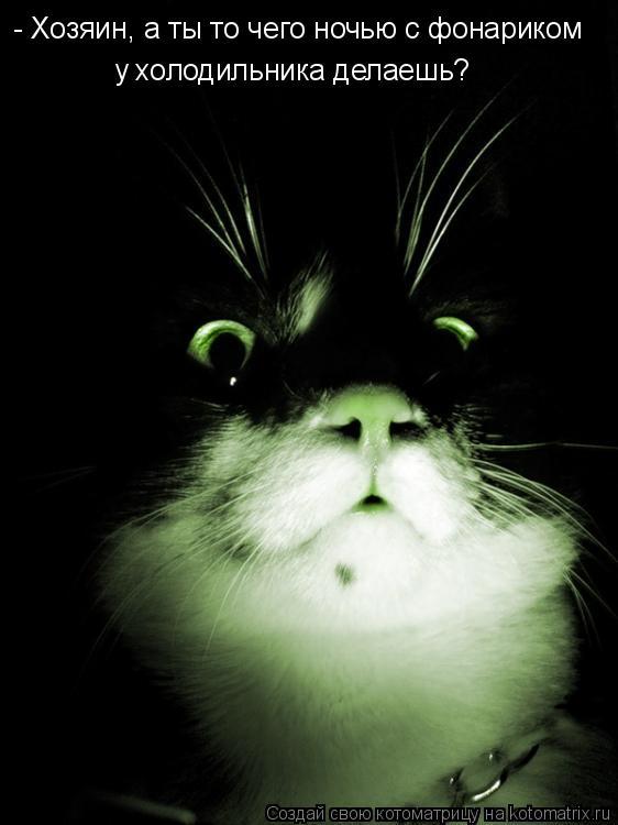 Котоматрица - - Хозяин, а ты то чего ночью с фонариком у холодильника делаешь?