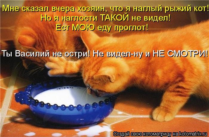 Котоматрица: Мне сказал вчера хозяин, что я наглый рыжий кот! Но я наглости ТАКОЙ не видел!   Ест МОЮ еду проглот! Ты Василий не остри! Не видел-ну и НЕ СМОТР