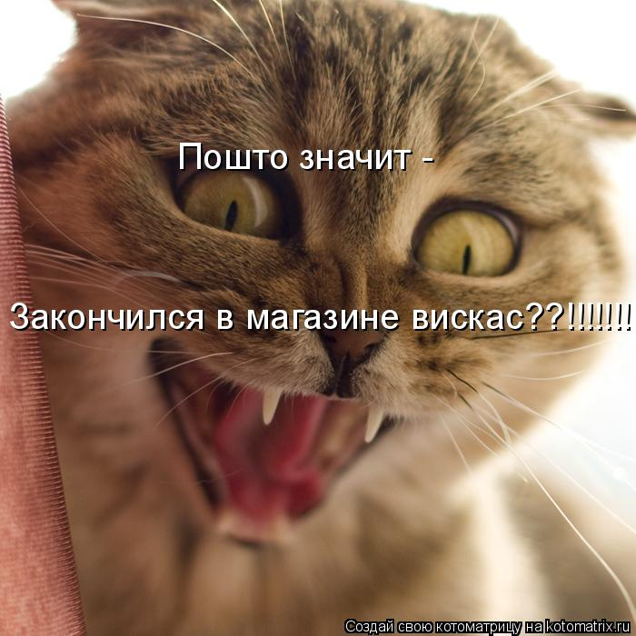 Котоматрица: Пошто значит -  Закончился в магазине вискас??!!!!!!!!!!!!!!!!!!!