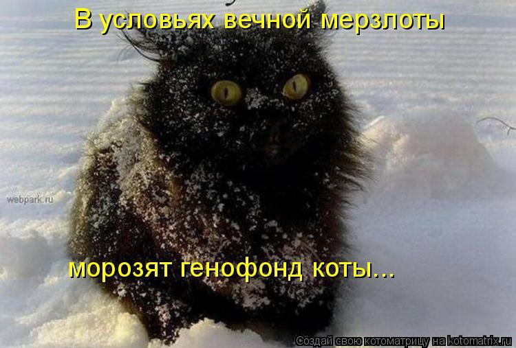 Котоматрица - В условьях вечной мерзлоты морозят генофонд коты...