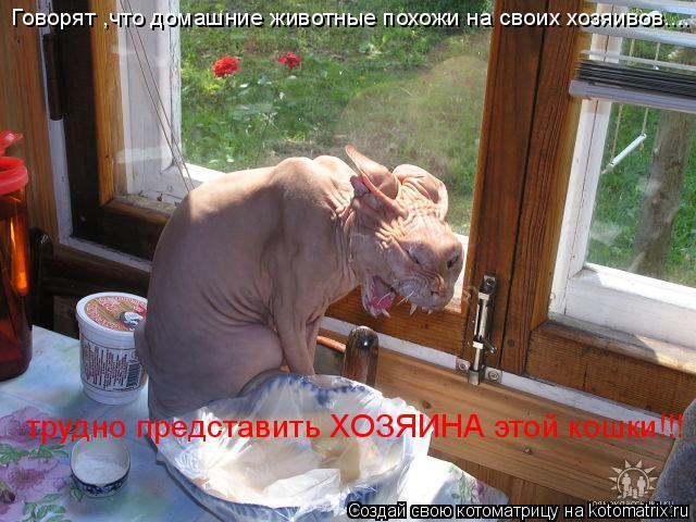 Котоматрица: Говорят ,что домашние животные похожи на своих хозяивов.... трудно представить ХОЗЯИНА этой кошки!!!
