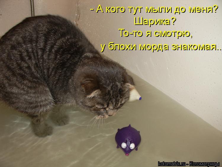 Котоматрица - - А кого тут мыли до меня? Шарика? То-то я смотрю,  у блохи морда знак