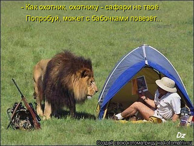 Котоматрица: - Как охотник, охотнику - сафари не твоё. Попробуй, может с бабочками повезёт...