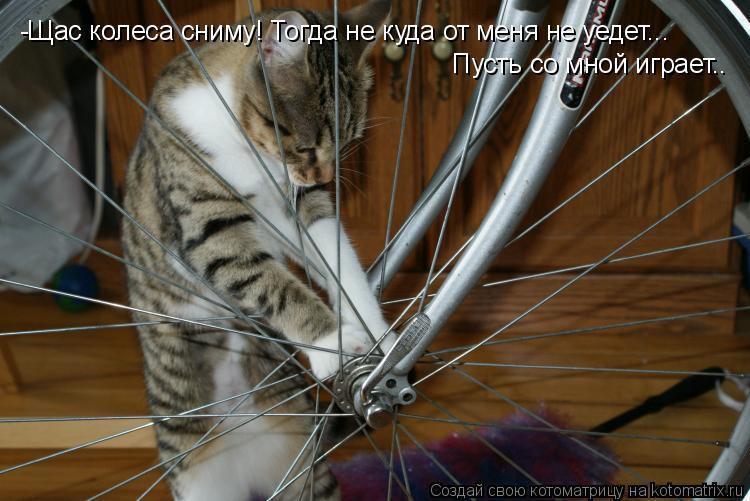 Котоматрица: -Щас колеса сниму! Тогда не куда от меня не уедет... Пусть со мной играет..