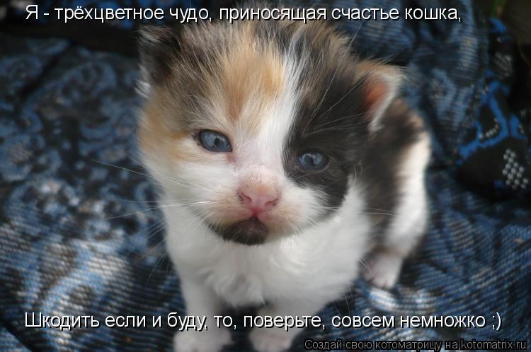 Котоматрица: Я - трёхцветное чудо, приносящая счастье кошка, Шкодить если и буду, то, поверьте, совсем немножко ;)