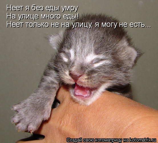 Котоматрица: Неет я без еды умру На улице много еды! Неет только не на улицу, я могу не есть...