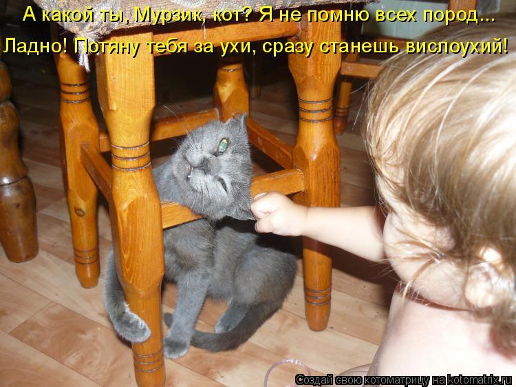 Котоматрица - А какой ты, Мурзик, кот? Я не помню всех пород... Ладно! Потяну тебя з
