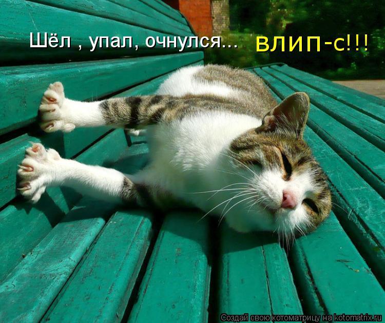 Котоматрица - Шёл , упал, очнулся... влип -с!!!