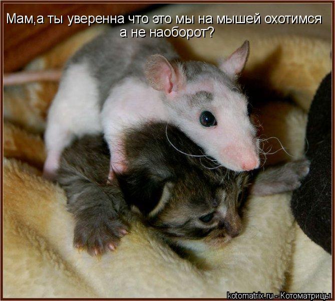 Котоматрица: Мам,а ты уверенна что это мы на мышей охотимся   а не наоборот?
