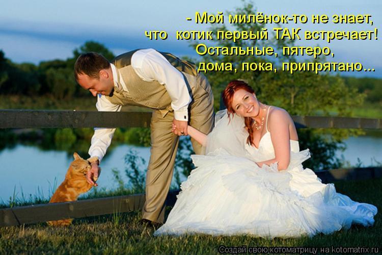 Котоматрица: - Мой милёнок-то не знает,  что  котик первый ТАК встречает!  Остальные, пятеро,   дома, пока, припрятано...