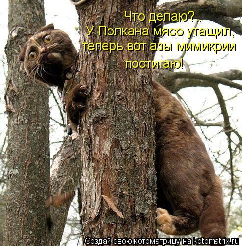 Котоматрица: Что делаю?.. У Полкана мясо утащил, теперь вот азы мимикрии  постигаю!