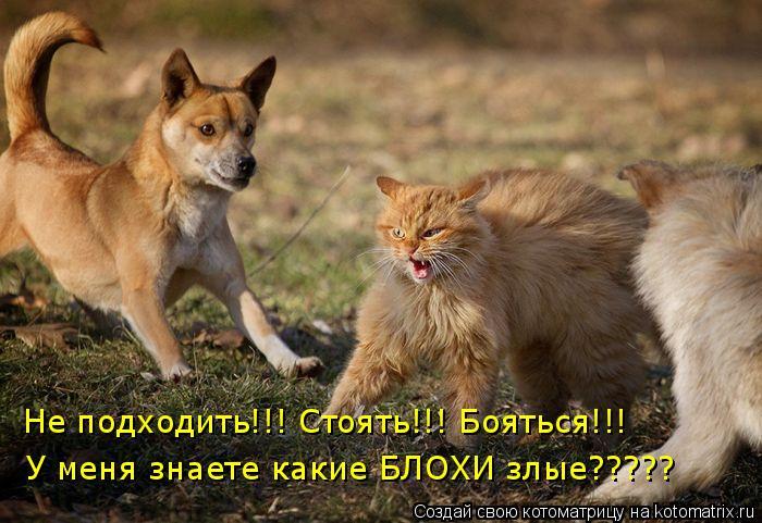 Котоматрица - Не подходить!!! Стоять!!! Бояться!!! У меня знаете какие БЛОХИ злые???