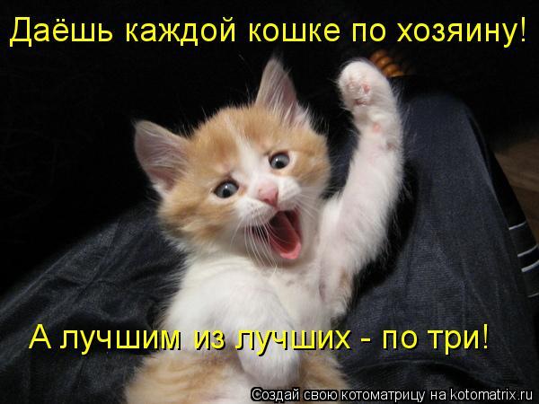 Котоматрица: Даёшь каждой кошке по хозяину! А лучшим из лучших - по три!