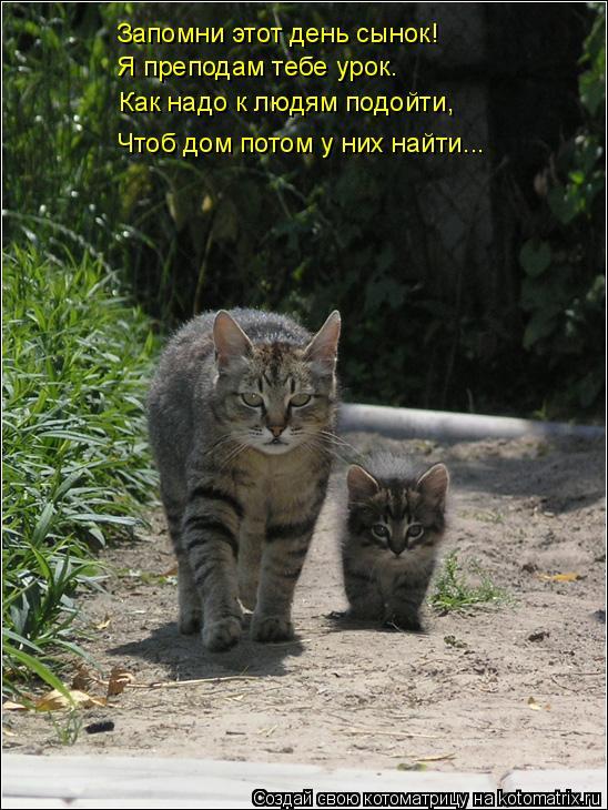 Котоматрица: Запомни этот день сынок! Я преподам тебе урок. Как надо к людям подойти, Чтоб дом потом у них найти...