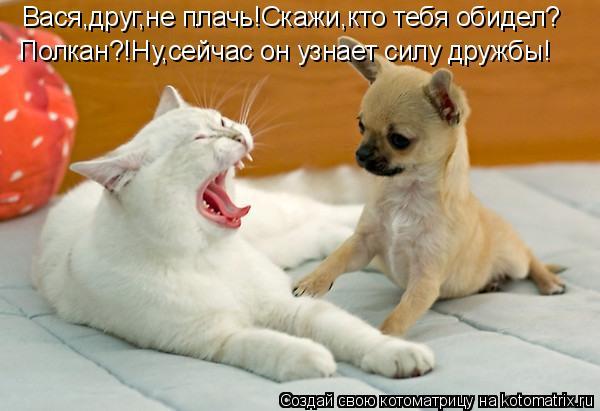 Котоматрица: Вася,друг,не плачь!Скажи,кто тебя обидел? Полкан?!Ну,сейчас он узнает силу дружбы!