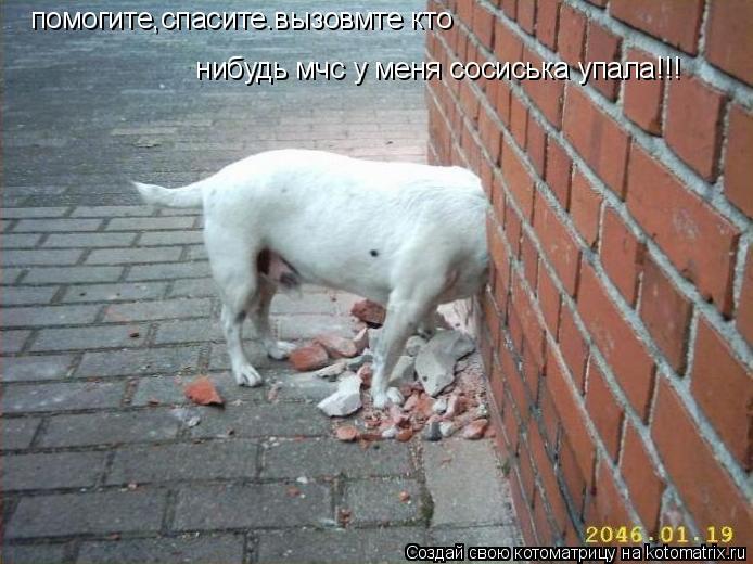 Котоматрица: помогите,спасите.вызовмте кто  нибудь мчс у меня сосиська упала!!!