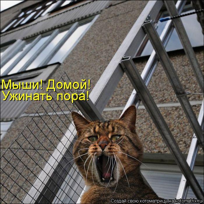 Котоматрица: Мыши! Домой! Ужинать пора!
