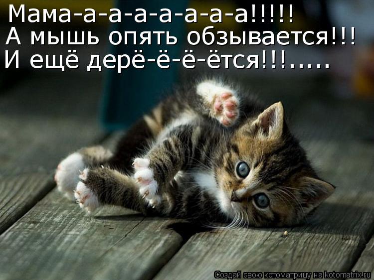 Котоматрица - Мама-а-а-а-а-а-а-а!!!!! А мышь опять обзывается!!! И ещё дерё-ё-ё-ётся