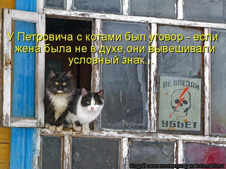 Котоматрица: У Петровича с котами был уговор - если жена была не в духе,они вывешивали условный знак...