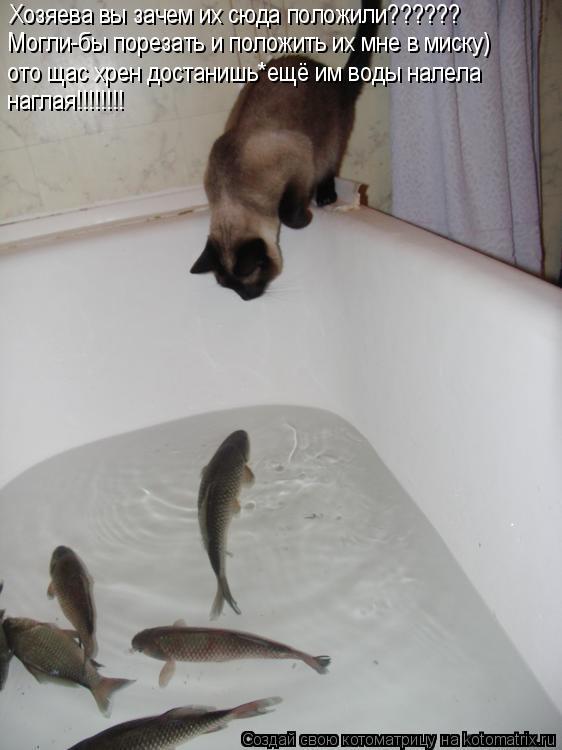 Котоматрица: Хозяева вы зачем их сюда положили?????? Могли-бы порезать и положить их мне в миску) ото щас хрен достанишь*ещё им воды налела наглая!!!!!!!!