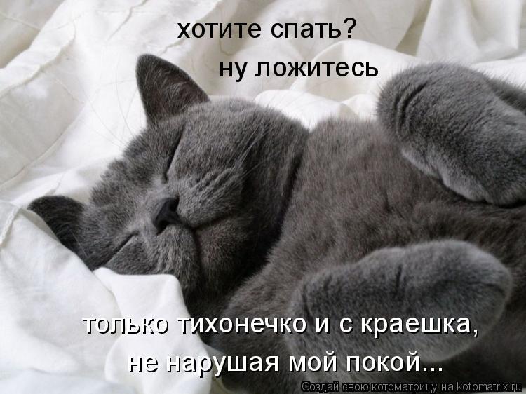 Котоматрица: хотите спать? ну ложитесь только тихонечко и с краешка, не нарушая мой покой...