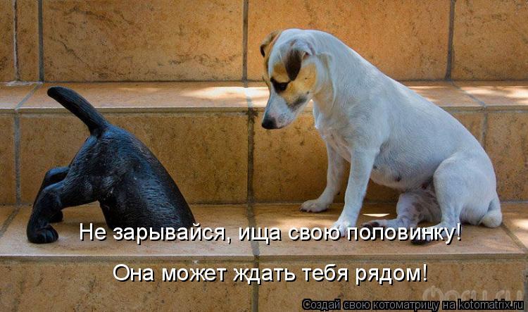 Котоматриця!)))) - Страница 6 942899