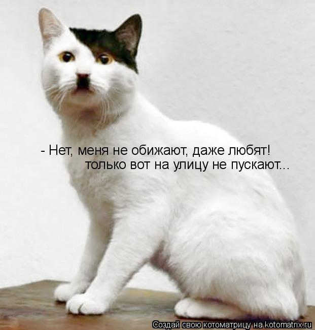 Котоматрица: - Нет, меня не обижают, даже любят! только вот на улицу не пускают...