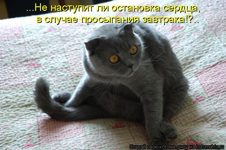 Котоматрица: ...Не наступит ли остановка сердца, в случае просыпания завтрака!?..