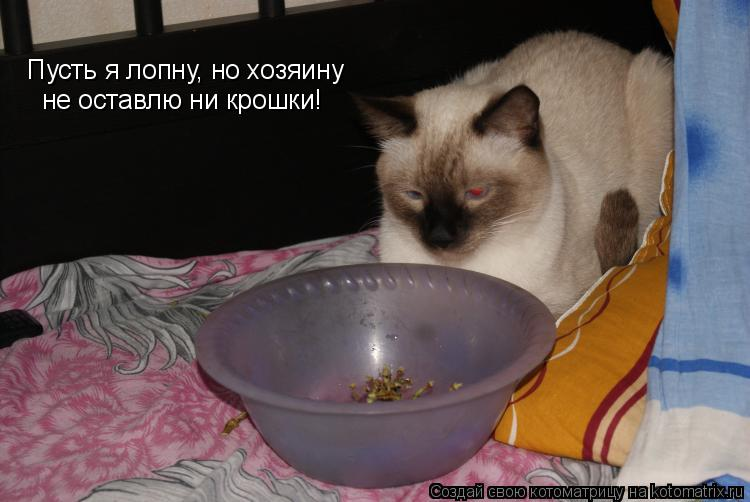 Котоматрица: Пусть я лопну, но хозяину не оставлю ни крошки!