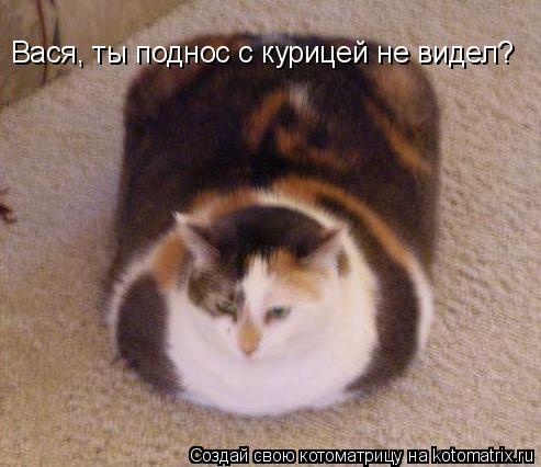 Котоматрица - Вася, ты поднос с курицей не видел?