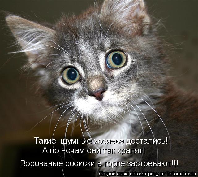 http://kotomatrix.ru/images/lolz/2011/07/04/943418.jpg