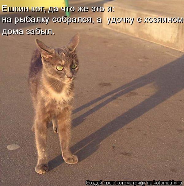 Котоматрица - Ешкин кот, да что же это я: на рыбалку собрался, а  удочку с хозяином